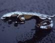 Jaguar F-Type by Arden (2)